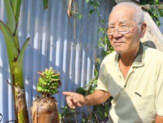 バナナの実が成長するかどうか、期待に胸を膨らませている比嘉さん