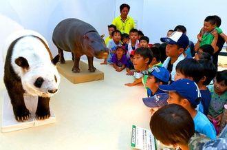 ジャイアントパンダ「リンリン」の剥製に見入るはにんすキッズ学童クラブの子どもたち=23日、那覇市おもろまちの県立博物館・美術館