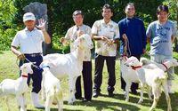 需要高まるヤギ、増産へ名護市が優良種貸し付け