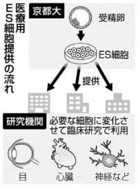 [きょうナニある?]/話題/医療用ES細胞 提供へ/国内初 京大今月から