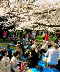 満開の桜を楽しむ江東沖縄県人会の「お花見の集い」の参加者ら=3月31日、東京・辰巳の森緑道公園