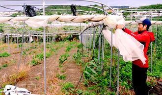 台風対策のため農業用ネットを巻き上げる農家=20日、南城市大里稲嶺