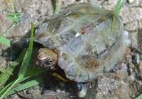 希少種守ります 世界自然遺産登録備え、沖縄県が保護区の導入検討
