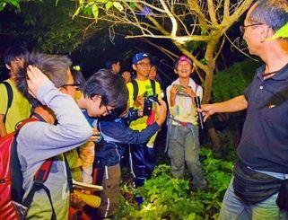 木の枝にゲジを見つけ、ライトを照らして興味深そうに眺める子どもたち=8日午後9時5分ごろ、国頭村の与那覇岳