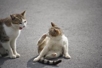 「ちょっとだけよ!!」奥武島のてんぷらやさんの近くの駐車場で