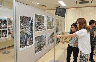 沖縄国際大学の米軍ヘリ墜落現場写真に見入る人たち=13日、宜野湾市・同大