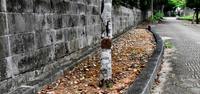 遊歩道にも除草剤 散布報告なく 沖縄・浦添大宮公園