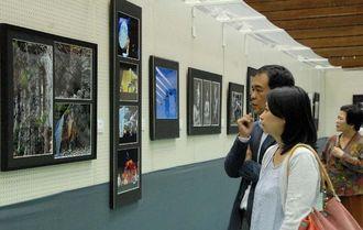 沖展会員やうるま市在住者の作品を、熱心に鑑賞する来場者=9日、うるま市具志川総合体育館