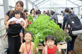 久米島町の海洋深層水で育てた野菜を楽しそうに収穫する福島県の親子たち=20日、同町真謝の県海洋深層水研究所