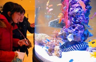 干支水槽を眺める来館客=沖縄美ら海水族館