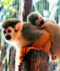 サルの赤ちゃん 名前がほしいな/名護ネオパークが募集