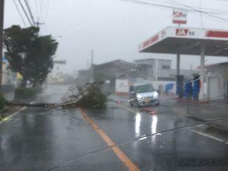 倒木を避けて通行する車。電線が切れ、暴風にあおられていた=29日午前11時30分、南城市大里
