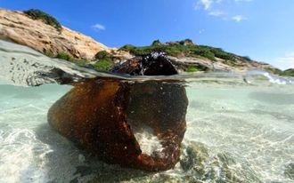 島の中央部には、砲弾の残骸が今も残る=19日、渡嘉敷村のハナリ島(伊藤桃子撮影)