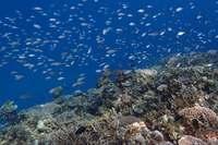 「大浦湾のサンゴ、健全」 市民団体が調査