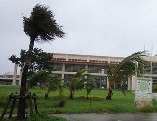 台風12号の暴風で、激しく揺れる南大東村役場前のヤシの木=24日、同所(東和明通信員撮影)