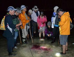 紫色の色素を出したアメフラシを観察する参加者=17日未明、浦添市のキャンプ・キンザー沖