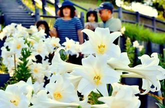 満開のユリを観賞しながら公園を散歩する家族連れ=4日午後、那覇市識名・大石公園