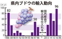 「種なし」が人気に 沖縄のブドウ輸入量、2016年は過去最高