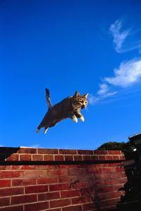 ネコ好き集まれ! 岩合光昭さんの写真展「ねこ」を、7月15日から浦添市美術館で開催