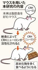 マウスを用いた本研究の内容