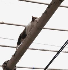 アーケードの梁から下りられなくなったネコ。救出開始から約2時間後に捕獲された=15日午後3時ごろ、那覇市牧志の平和通り