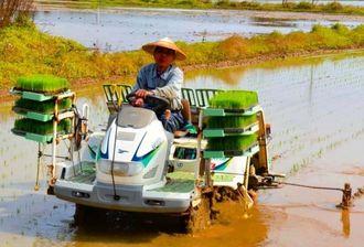 田植え機で稲の苗をまっすぐに植え付ける仲新城さん=石垣市新川