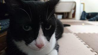 「何だコラ!こっち見るんじゃねぇよ!」叔母の家に行った時、人の前に座り込んでじーっと睨んきた時の写真