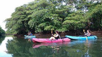 ヒナイ川でカヌーを楽しむツアー客=11月、西表島