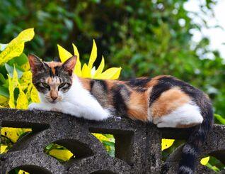 塀の上からチラシを見つめる猫=3日、大宜味村喜如嘉