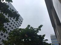 沖縄の天気予報(8月11日~12日)沖縄本島地方で強風 台風14号の影響で荒れた天気に