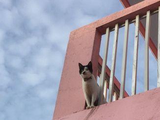 「番猫」 台風接近中