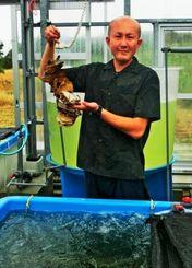 陸上養殖したカキを手にするヒューマンウェブの研究担当・佐藤圭一さん=久米島町、同社の沖縄久米島研究所