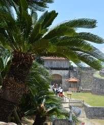 首里城公園ではソテツの群生が観光客を迎える=那覇市首里