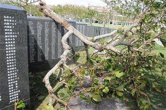 平和の礎刻銘板に倒れた木。17日の竜巻で倒れたとみられる=18日午後0時50分ごろ、糸満市摩文仁