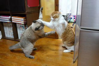 「大ゲンカ」ほぼ毎日喧嘩します。