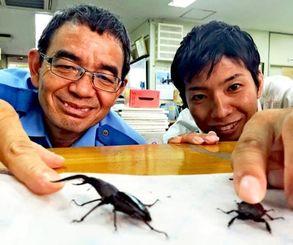 同僚とクワガタを世話する嘉数さん(左)=那覇署