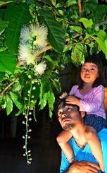 開花したサガリバナの姿や香りを楽しむ人たち=28日、那覇市首里崎山町馬場通り