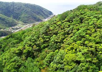 新緑が芽吹き、黄緑色に染まる山々=19日、国頭村辺野喜(小型無人機で金城健太撮影)