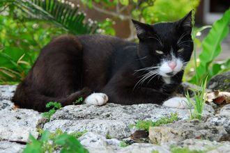 石垣の上でくつろぐ猫