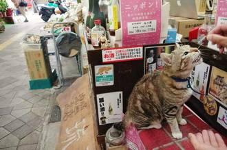 「栄町の看板娘」店先からじっと動かないのは、餌がもらえるかららしい。店主さんより儲けているのは猫?