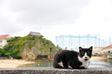 癒やされる…沖縄のネコ厳選14枚 メール編