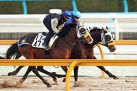 競馬、キタサンは連覇へほぼ万全 ジャパンカップ追い切り