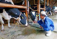 牛や馬に オ酢スメ/家畜の夏バテ予防期待