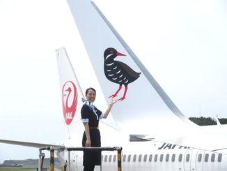 ヤンバルクイナを塗装したJTAの737―800型機=13日、那覇空港内のJTAメンテナンスセンター