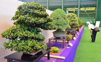 愛好家が丹精込めて育てた盆栽に見入る来場者=26日、うるま市石川屋内運動場
