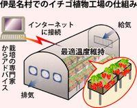 イチゴ IT遠隔栽培/日本流通システム 伊是名に19年工場/自動化 初心者にも対応