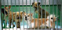 すべての犬に混合ワクチン 沖縄県動物愛護管理センター 愛護団体の医療負担を支援