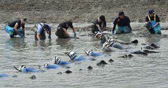 水路で遺留品を捜索する捜査員=24日午後3時10分、うるま市州崎