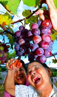 甘くて大粒!思わず笑顔 沖縄で日本一早いブドウ狩り