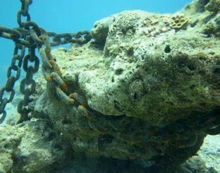 コンクリートと海面のブイをつなぐチェーンが絡まったサンゴ礁の一部=13日、名護市辺野古沖(ダイビングチームレインボー提供)